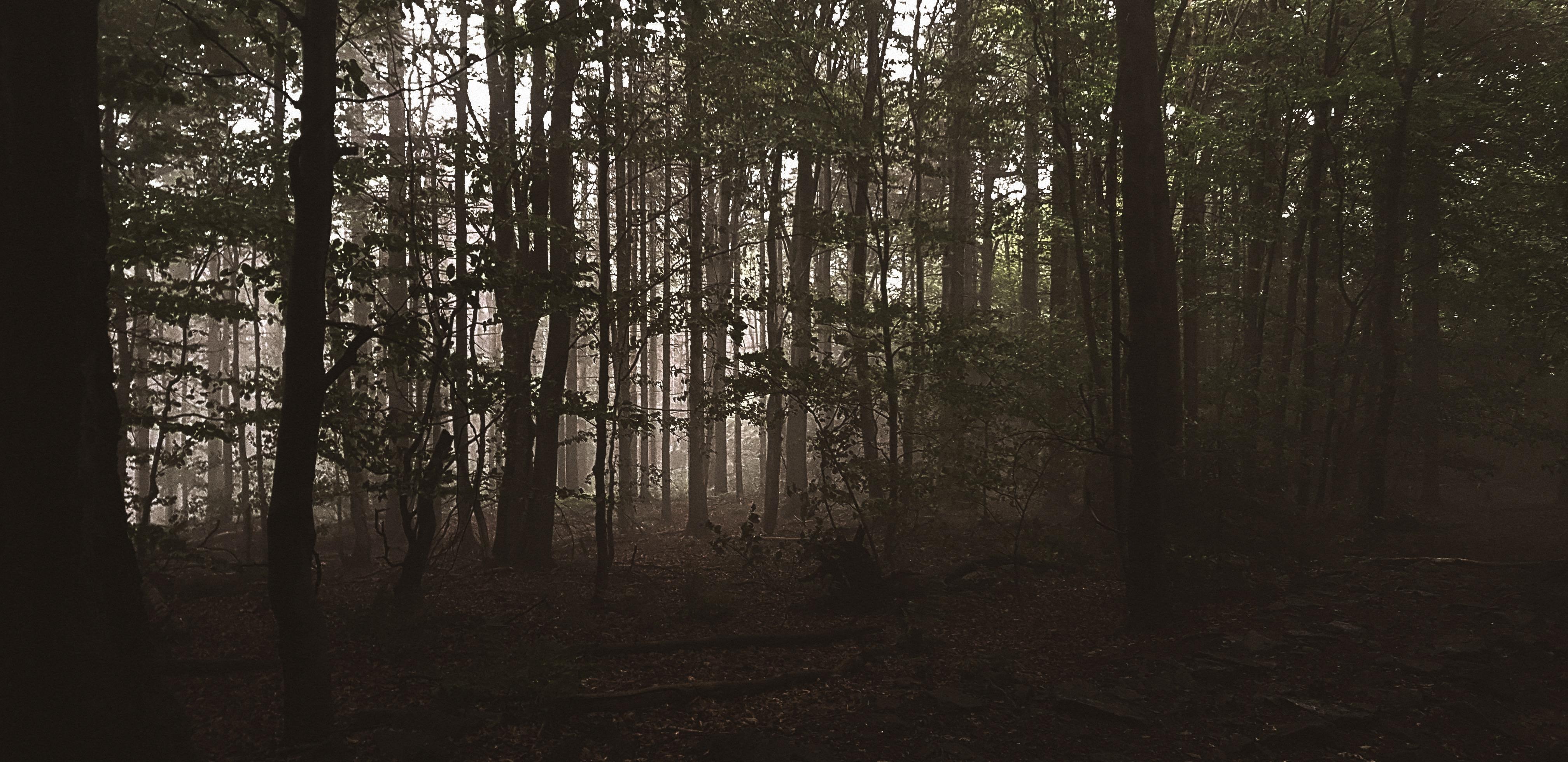 Forest around Ślęża mountain